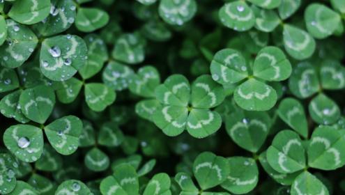 best irish plays